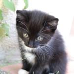 cat-166813_640(1)