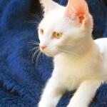 cat-230753_640