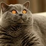 cat-2886_640