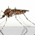 mosquito-83639_640