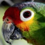 parrot-55293_640