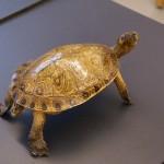 turtle-281079_640